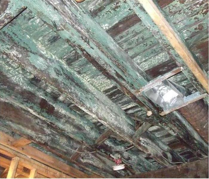 Keene Mold Infestation Is Extensive Before
