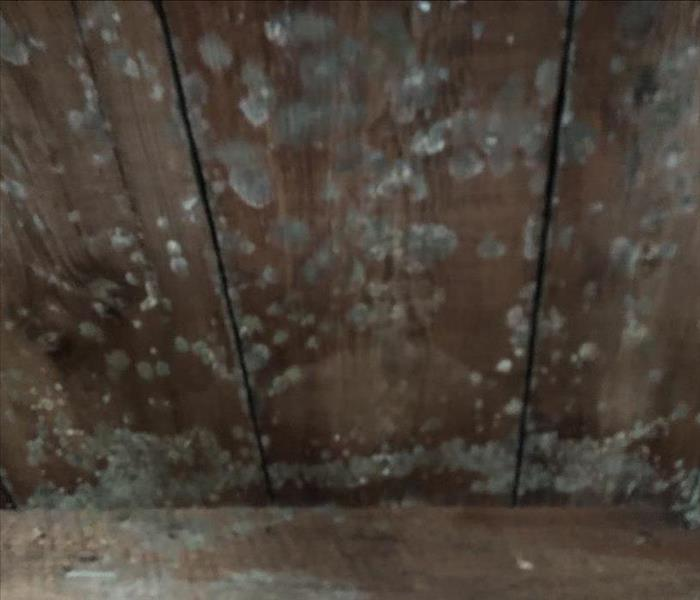 Mold Caused by Water Damage Before