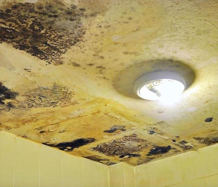 Mold Remediation The Importance of Fast Response to Mold Damage in Your Walpole Residence
