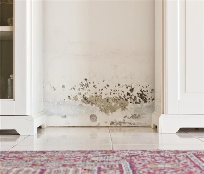 Mold Remediation Take Our Advice To Avoid Further Mold Damage In Rindge